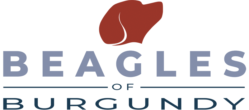 Beagles Of Burgundy - BoB (en)